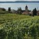 Aussicht auf Twann und den Bielersee im Sommer
