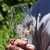 Tinus Weine, Weinglas schwenken